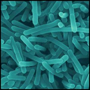 Listeria en un microscopio